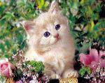 kucing-comel11