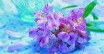 bunga 03