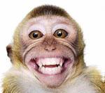 Gambar-Monyet-Lucu-Gokil-Kocak-3