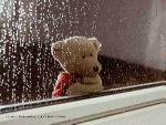 bear-hujan